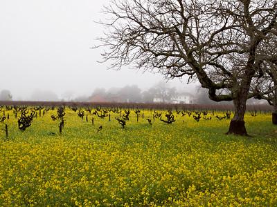 St. Helena Mustard-1174762.jpg