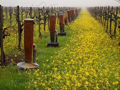 St. Helena Mustard-1174759.jpg