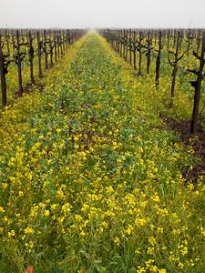 St. Helena Mustard-1174755.jpg