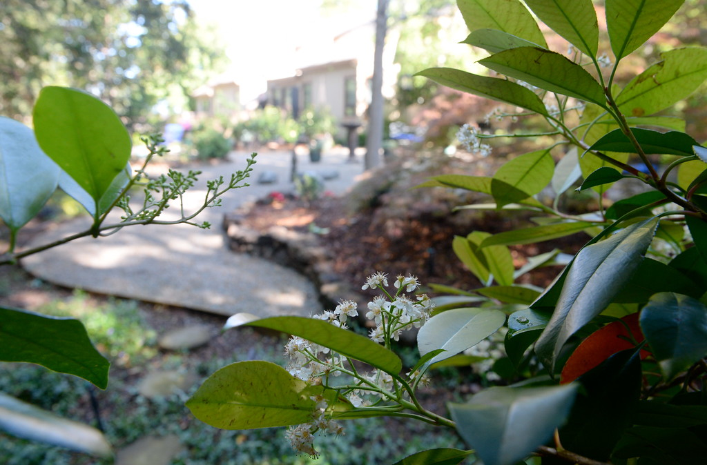 . Gravel walkways area seen winding through back yard sitting areas during a tour of the garden at Ruth Guzley\'s residence in Chico, Calif. Friday April 14, 2017. This is one of the gardens that will be featured during the St. John Episcopal Church Garden Tour.  (Bill Husa -- Enterprise-Record)