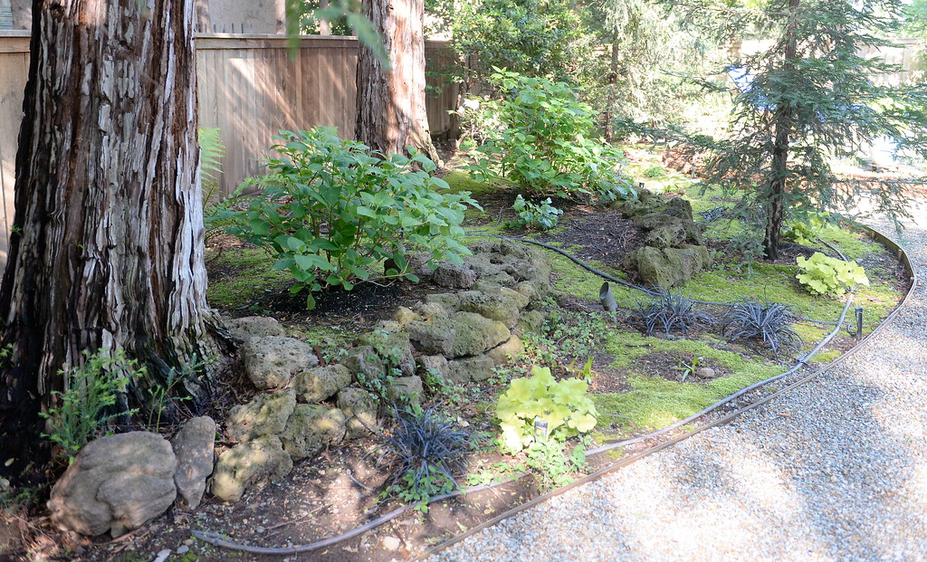 . Some nice Redwoods provide shade in the back yard seen during a tour of the garden at Ruth Guzley\'s residence in Chico, Calif. Friday April 14, 2017. This is one of the gardens that will be featured during the St. John Episcopal Church Garden Tour.  (Bill Husa -- Enterprise-Record)