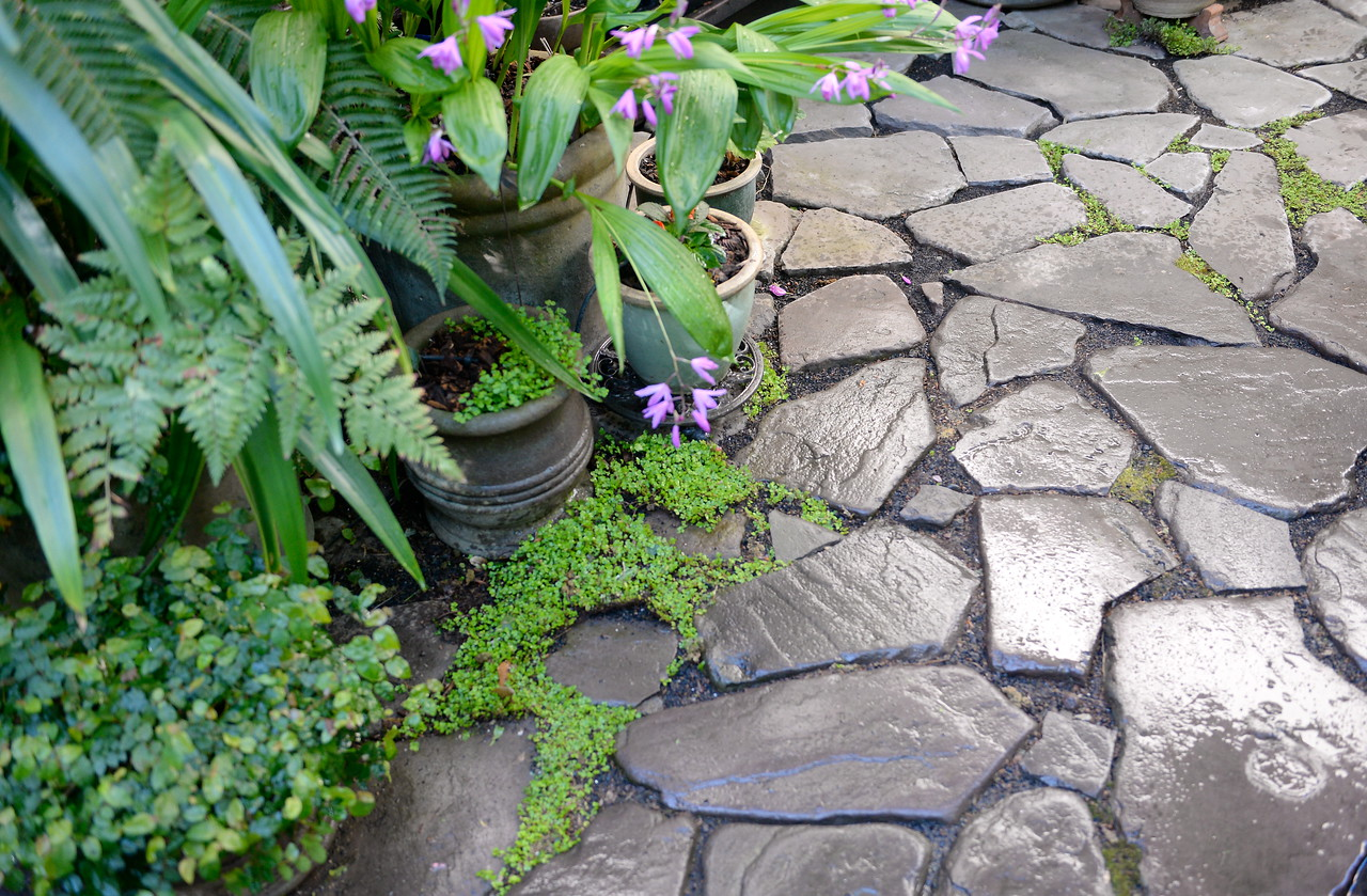 Tiny green plants grown in between the stepping stones seen during a tour of the garden at Ruth Guzley's residence in Chico, Calif. Friday April 14, 2017. This is one of the gardens that will be featured during the St. John Episcopal Church Garden Tour.  (Bill Husa -- Enterprise-Record)