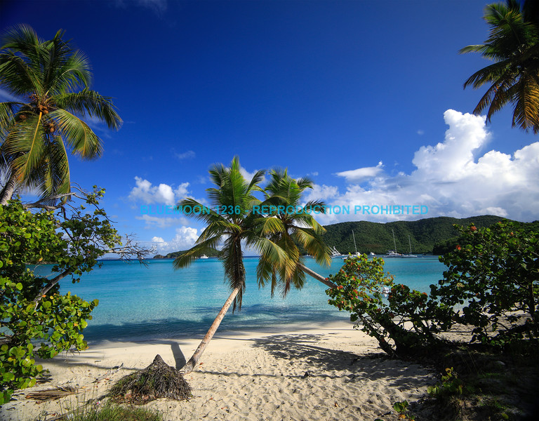 Palm Trees - Maho Bay, St. John USVI