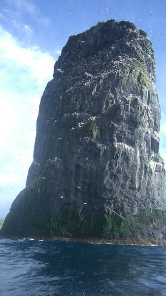 Gannet World