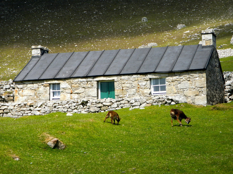 St Kilda sheep