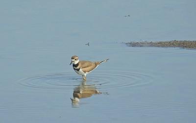Riverlands Migratory Bird Sanctuary 8.3.2018_8.9.2018