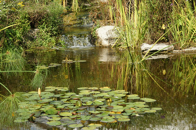 Outdoor Lily pads, pond and waterfall