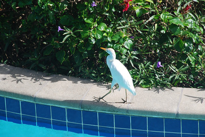 St. Lucian Honeymoon: Backyard waves and morning birdwatching