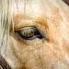Close-up of Horse's Face and Eye