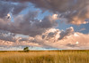 Rolling clouds over a wheat field
