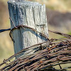 Wood fence with a roll of barbed wire