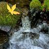 Small water spout on Gordon creek Oregon