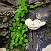 Tree Trunk with mushrooms in Hiroshima Japan