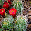 Spring flower in bloom on a cactus