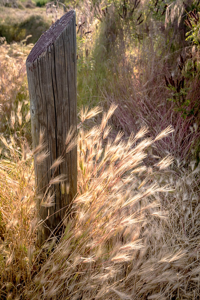 Old Fence post and wild grasses