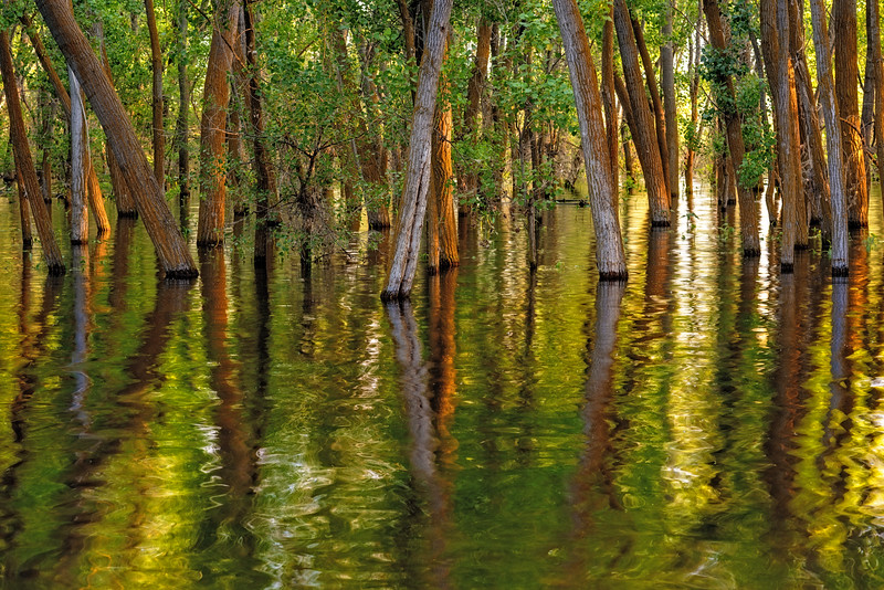 Flooded forest of Lake Lowell Idaho and reflection