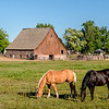 Horses feeding in a field with an old barn