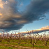 Dramatic clouds over a southern Idaho Orchard
