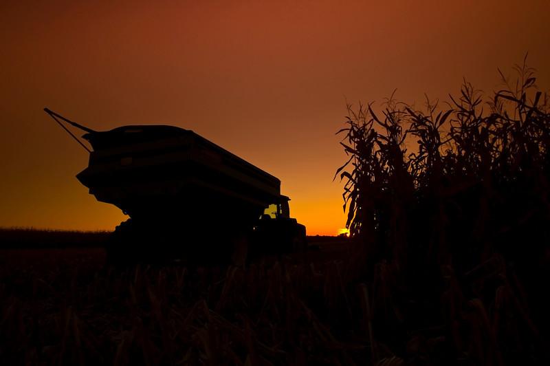 Combine and Corn Field