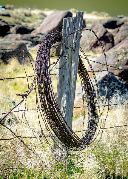 Roll of rusted barbed wire