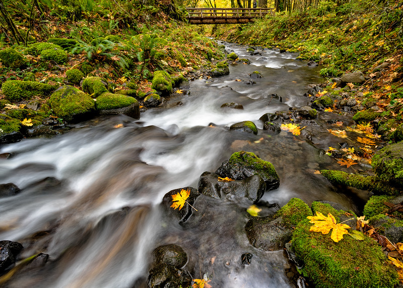 Gordon Creek Autumn with Bridge