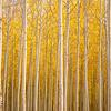 Oregon Autumn Tree Farm