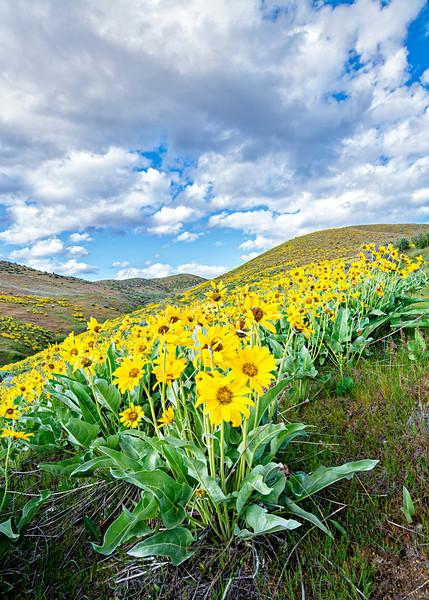 Spring Flowers in Hills