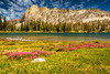 Wild Flowers in a Meadow at Twin Lakes Idaho