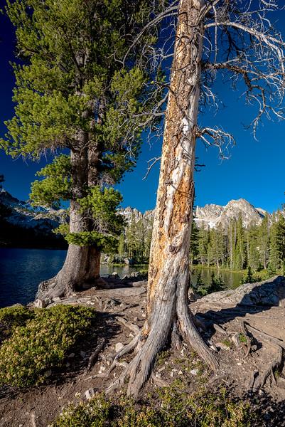 Two large trees and Idaho mountain lake