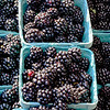 Fresh Blackberries for Sale