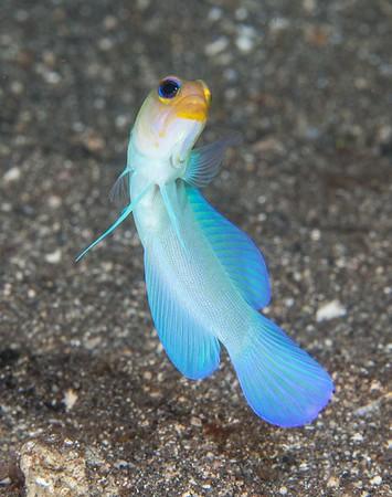 St. Maarten-Saba-St. Kitts diving