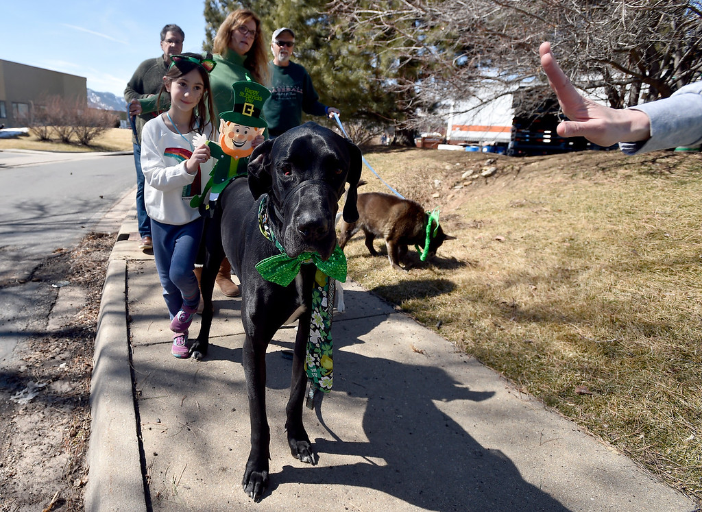 . BOULDER, CO - MARCH 17, 2019: Elsie, 7, walks behind her dog Gordon during the St. Patrick\'s Day Puppy Parade on Sunday outside of the Boulder Beer Company in Boulder. For more photos of the parade go to dailycamera.com (Photo by Jeremy Papasso/Staff Photographer)
