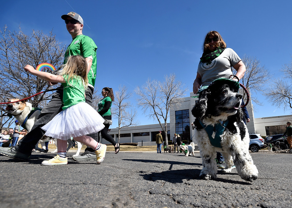 . BOULDER, CO - MARCH 17, 2019: Becky Brown, at right, walks her dog Joker during the St. Patrick\'s Day Puppy Parade on Sunday outside of the Boulder Beer Company in Boulder. For more photos of the parade go to dailycamera.com (Photo by Jeremy Papasso/Staff Photographer)