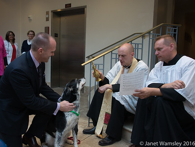 2016 St. Francis animal blessing
