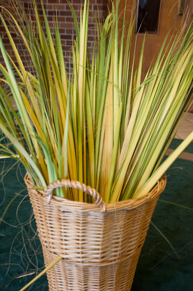 Palm Sunday-113