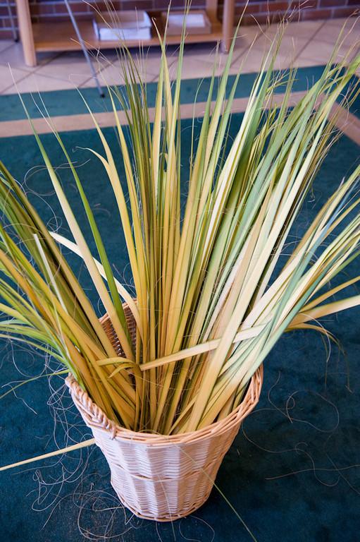 Palm Sunday-101