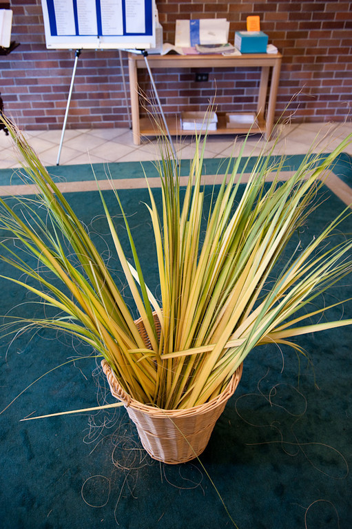 Palm Sunday-102