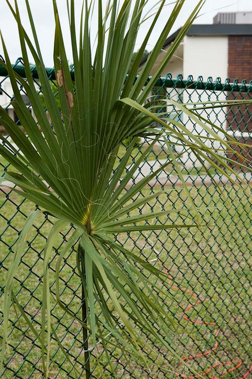 Palm Sunday-119