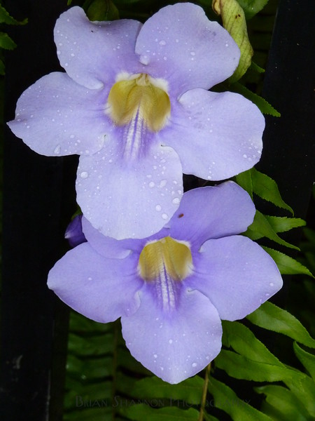 Tropical flowers in purple