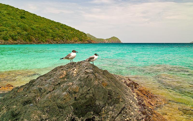 Seagulls at Coki beach