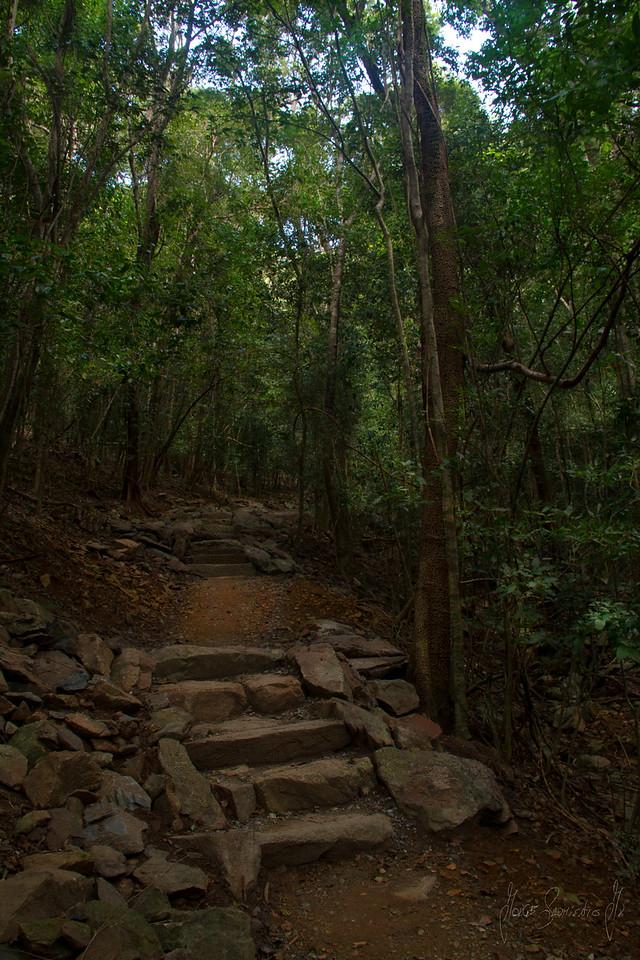 Reef Bay Trail.