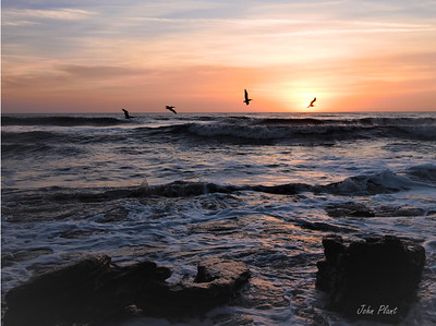 Pelicans at Sunrise by John Plant