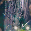 Spiders Web after the Rain