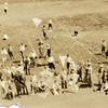 Kite Contest I (02101)