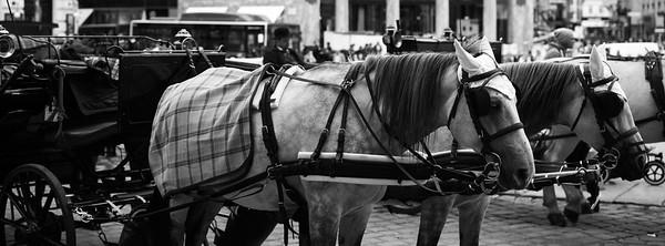 Oft steht in den Nachtquartieren zu wenig Platz für angemessene Ställe zur Verfügung. Es wurden auch schon Fälle dokumentiert, wo Pferde in feuchten, dunklen Kellergewölben in Anbindehaltung untergebracht waren.