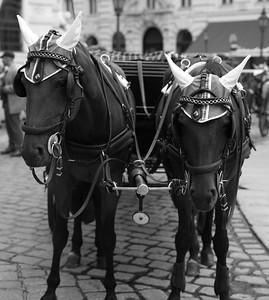 Tierschutzorganisationen kritisieren die Bedingungen, unter denen Fiakerpferde eingesetzt werden und ihre Unterbringung während arbeitsfreier Zeiten. Pferde würden als Fluchttiere im Straßenverkehr zu sehr gestresst und hätten auch keine geeigneten Bewegungsmöglichkeiten. Darüber hinaus sollte Pferden permanent Futter und Wasser zur Verfügung stehen, um Koliken zu vermeiden, die unter Umständen zum Tod der Pferde führen können.