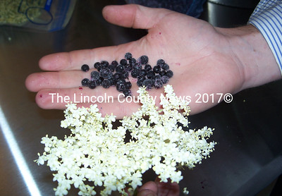 From Elderberry flowers grown at ElderTide Pharm below come elderberries, which have the appearance of small blueberries but contain more anti-oxidents. (Greg Foster photo)