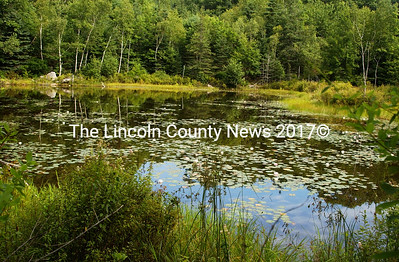 Picturesque pond on the Pine Tree Preserve in Boothbay Harbor. (Paula Roberts photo)