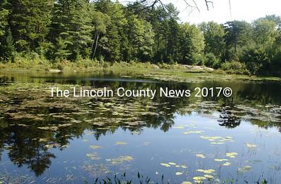 The mill pond in Mill Pond Preserve in Waldoboro. (Paula Roberts photo)