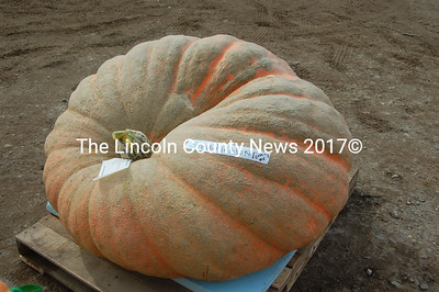 Steve Pierpont's oddly-shaped pumpkin took fifth place in the adult giant pumpkin category at 1219.5 lbs. (J.W. Oliver photo)